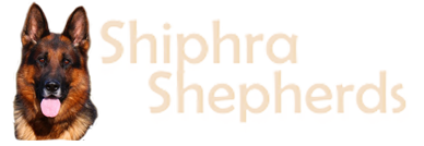 Shiphra Shepherds