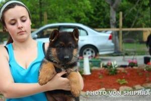 viendi puppy 2